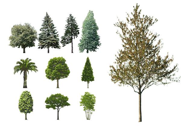 Trees Upload